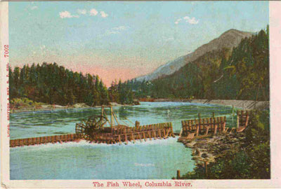 A postcard image, circa 190, of a fish wheel working somewhere on the Columbia.