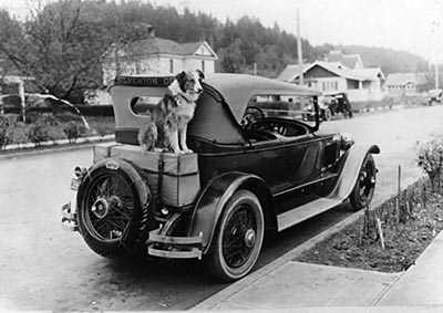 Bobbie the Wonder Dog on the Braziers' car in Silverton.