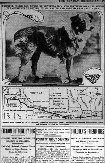 The Oregonian newspaper coverage of Bobbie the Wonder Dog.