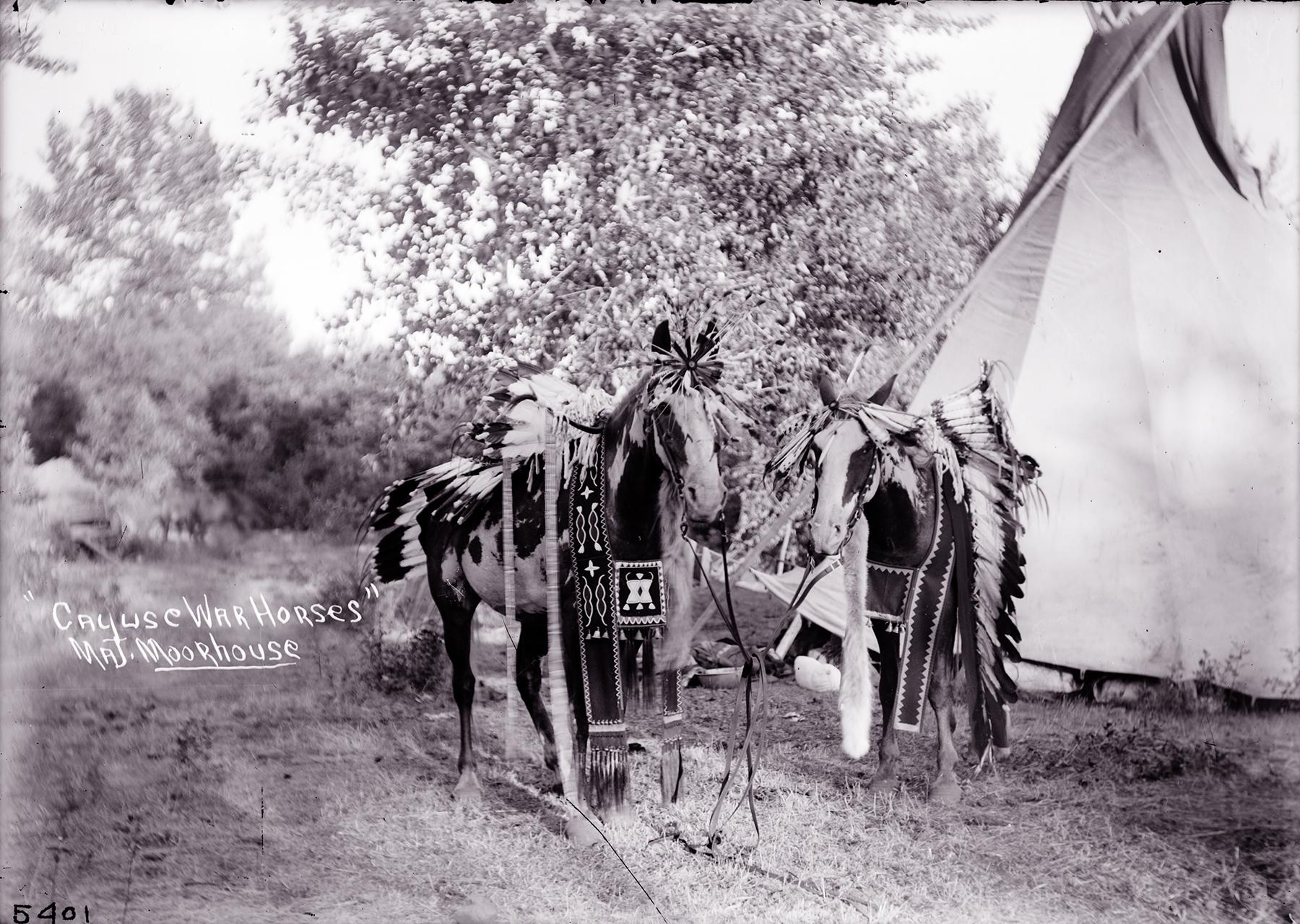 cayuse single guys Style# 14849shaft height shaft leather11 kidskin/ dakota militarshaft stitching vamp & counterdalhart caballo rancho honey/ caballo rancho honeytoe scallopblunt ddswelt / welt row sole edge.